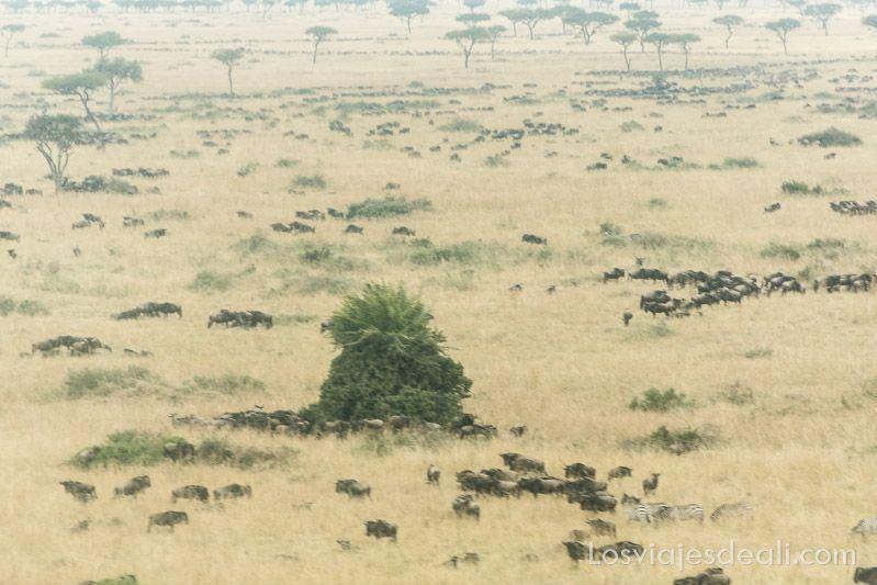 dos días en masai mara vuelo avioneta