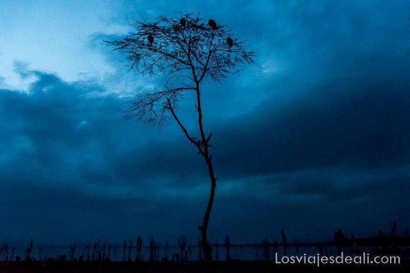 noche en el Lago Naivasha