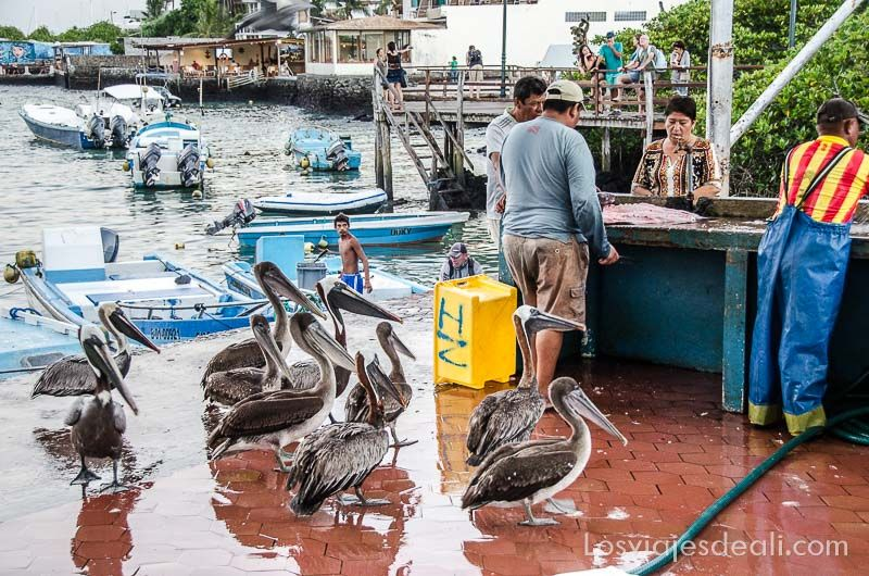 isla santa cruz mercado pescado