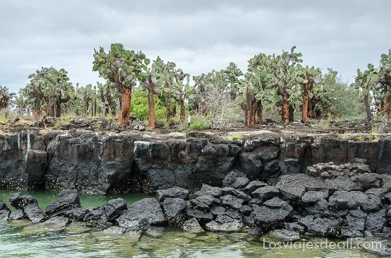 isla santa cruz tortuga bay playa mansa