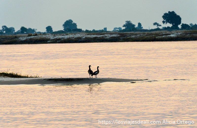 aves en parque nacional de chobe