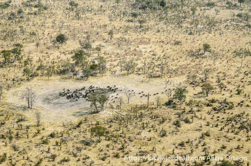 sobrevolar el delta del okavango