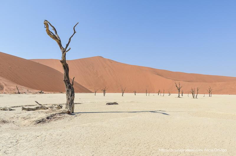árbol y su sombra en Deadvlei namibia
