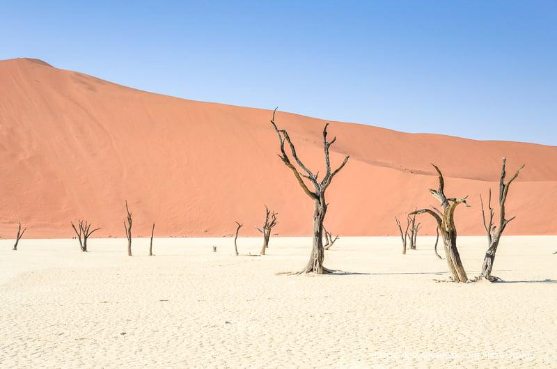 gran duna naranja con cielo azul y árboles secos en Deadvlei de Namibia
