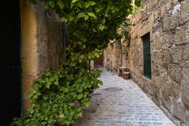 calleja de Victoria con planta trepadora qué ver en Gozo