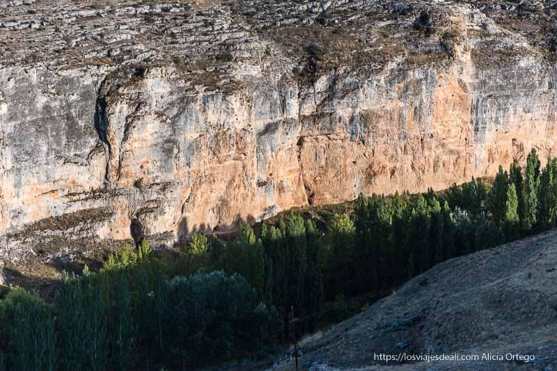 el cañón del río ucero y los chopos que crecen junto al río desde la atalaya de Uxama