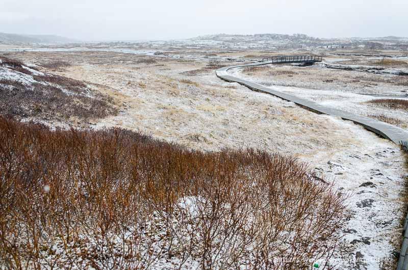 camino de pingvellir que serpentea entre campos congelados y arbustos de ramas de color rojo triángulo dorado de islandia