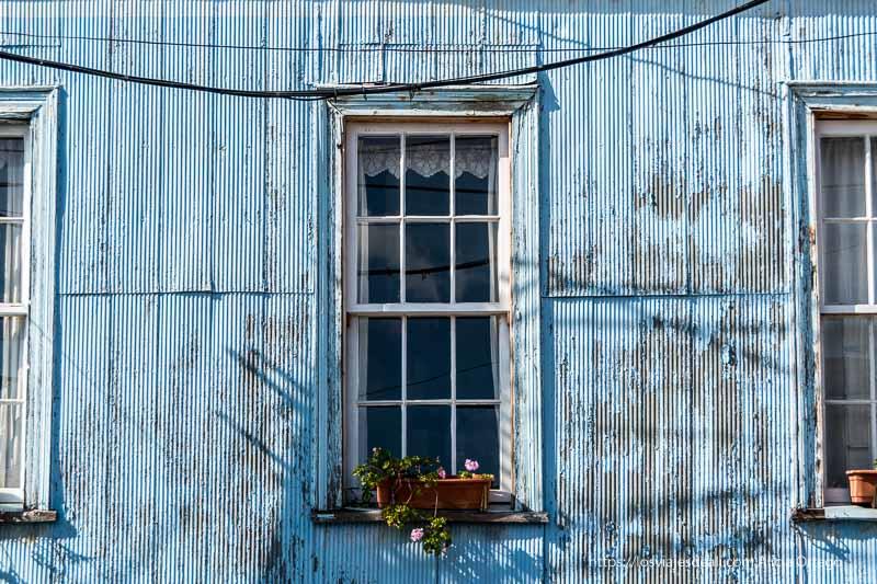 ventana con maceta de flores en pared de chapa pintada de azul Viña del mar y valparaíso