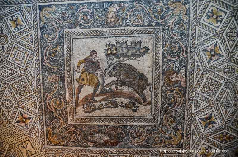 mosaico con escena de caza de jabalí en el centro museo de arte romano de mérida