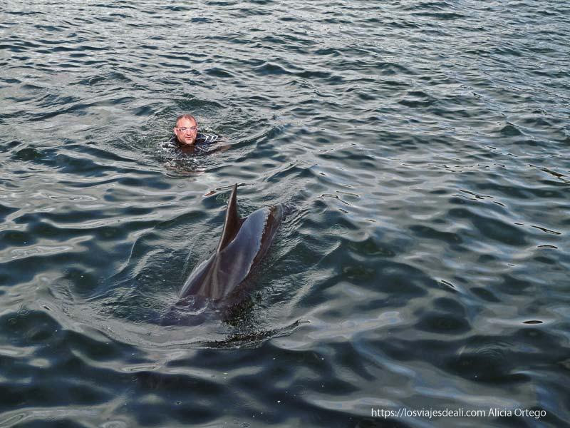 delfín en bahía de doolin acantilados de moher