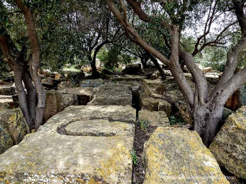piedras de ruinas entre olivos agrigento
