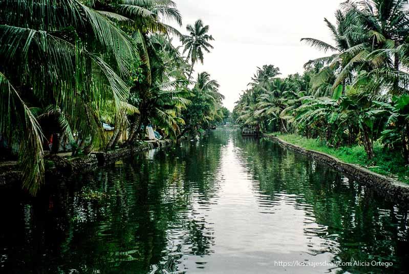 un canal secundario de los backwaters de kerala con palmeras