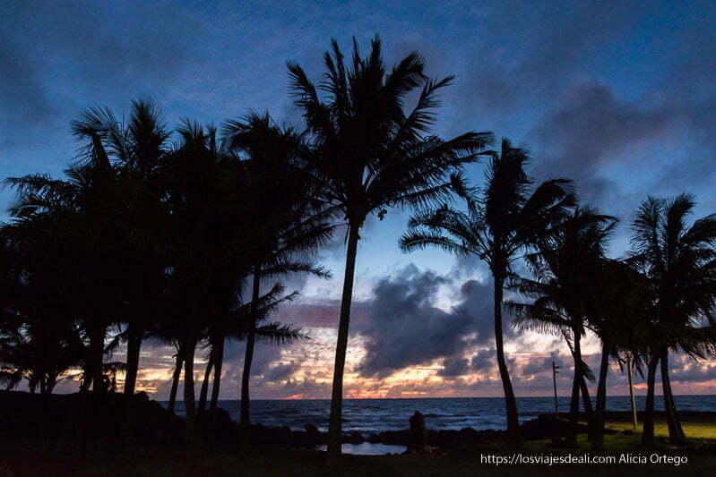 palmeras recortándose en cielo de atardecer con nubes cómo es viajar a Isla de Pascua