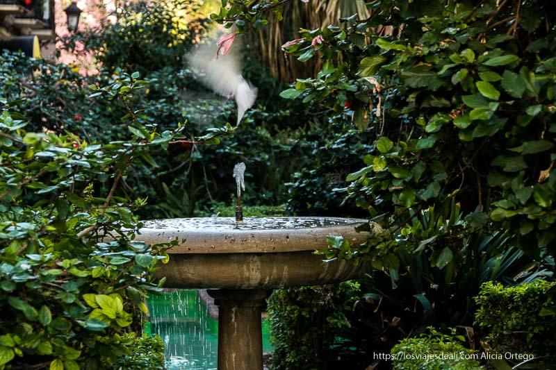 paloma volando sobre chorro de fuente centro de málaga