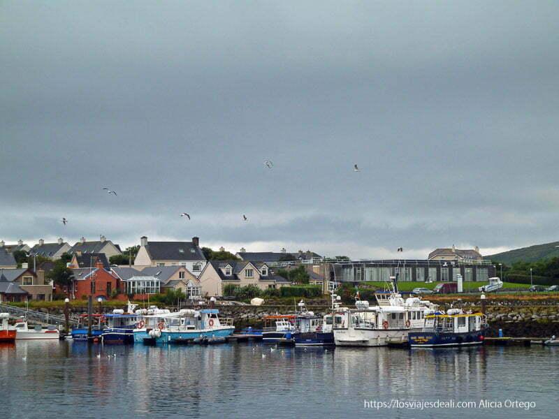 puerto de dingle con gaviotas volando