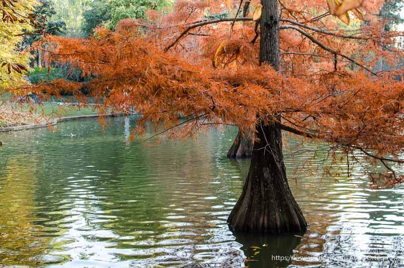 árboles rojos en el estanque del palacio de cristal de el retiro