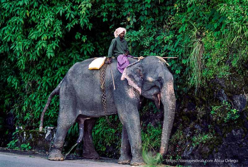 elefante haciendo pis en la carretera de tamil nadu a kerala