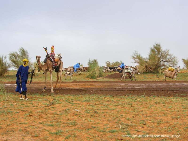tuareg con su camello y familia detrás con ganado de camino a tombuctu un sueño hecho realidad
