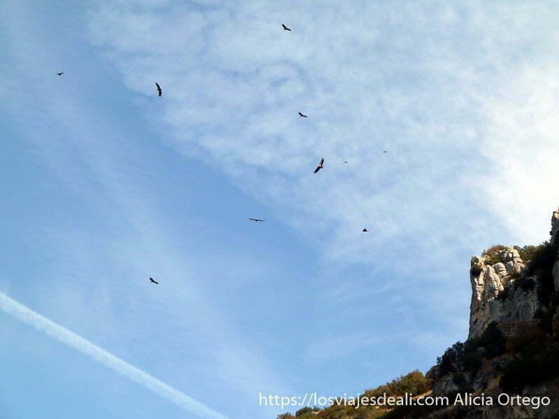 grupo de buitres volando en círculo navarra
