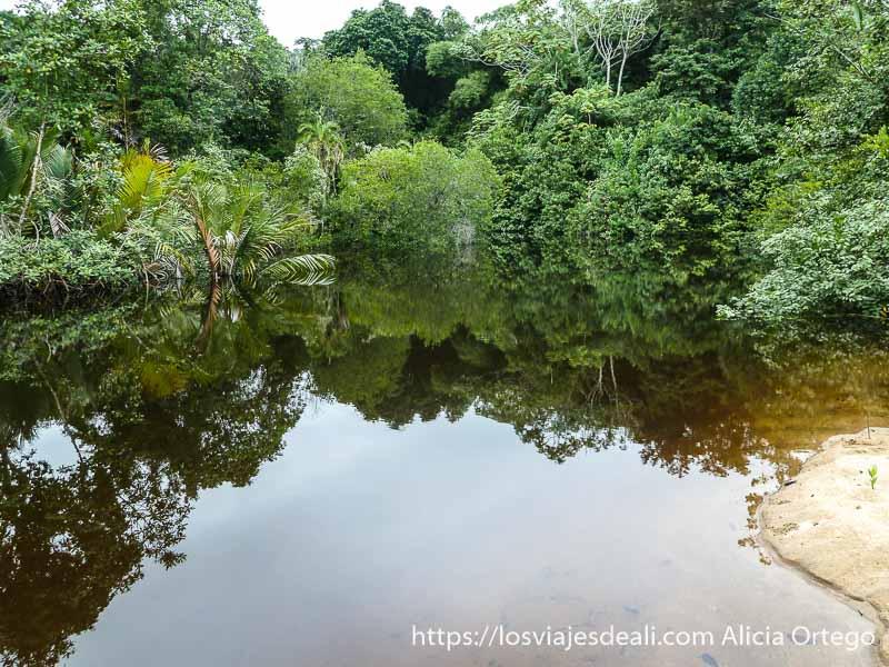 vegetación selvática reflejándose en remanso de agua dulce