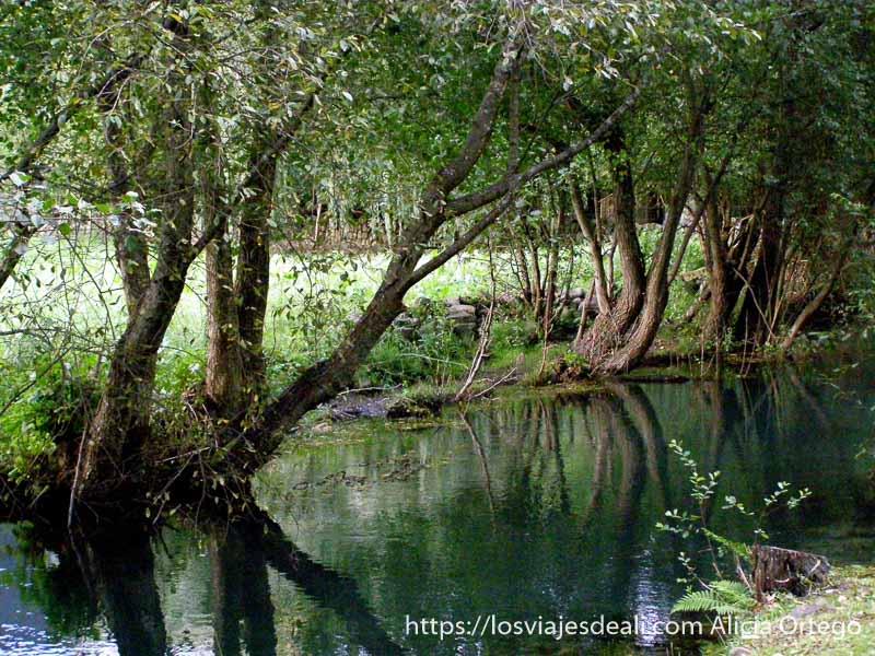 río con árboles en la orilla de troncos inclinados sobre el agua y reflejándose en esta
