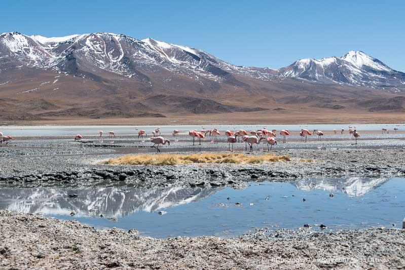 flamencos en la laguna hedionda con volcanes al fondo