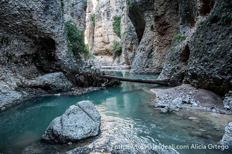 río guadalevín con árbol cruzado tumbado por la riada escapada a ronda