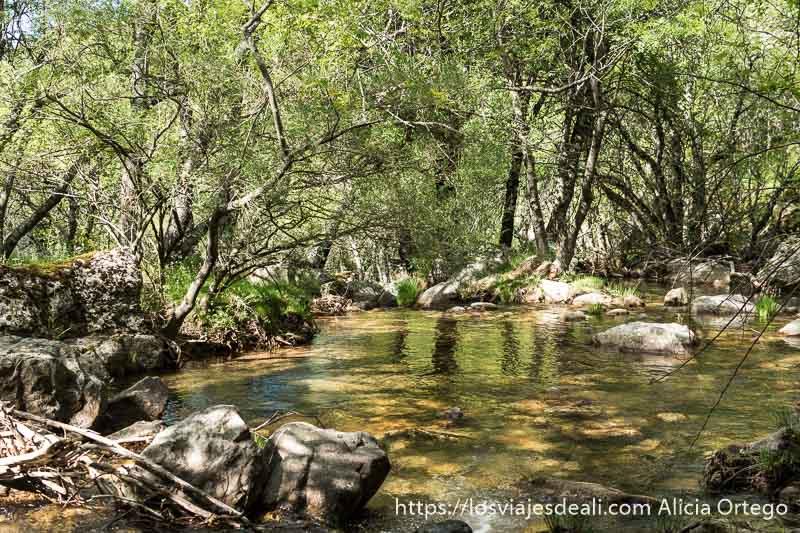 poza de agua cristalina y árboles reflejándose en la ruta de 1 día en el valle del lozoya