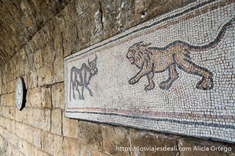 mosaico de un toro enfrentándose a un león los dos con actitud de caminar en beiteddine excursión a los alrededores de beirut