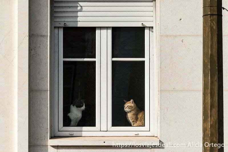 dos gatos en una ventana cada uno en un lado mirándose de frente en belem