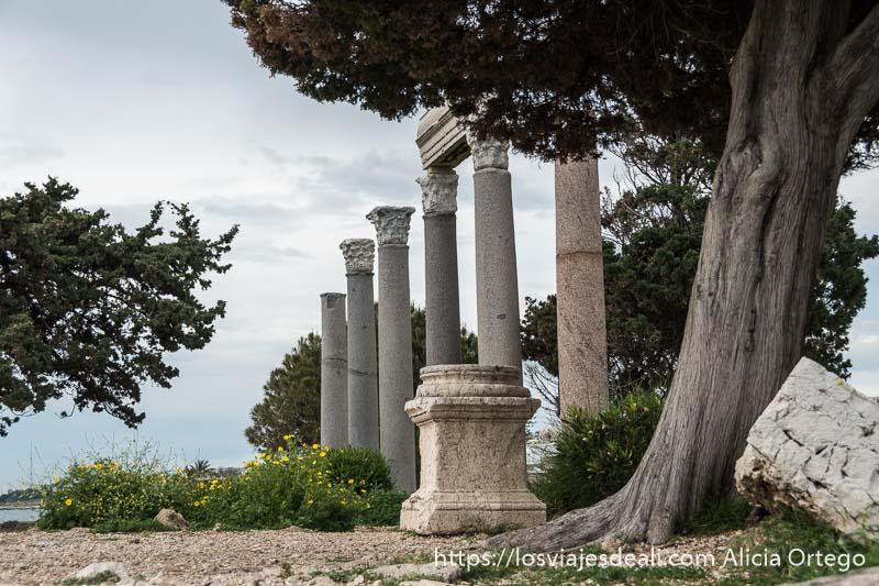 seis columnas con capiteles corintios junto a árboles mediterráneos en la ciudad antigua de byblos