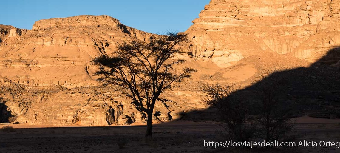 acacia a contraluz fauna y flora del desierto del sahara