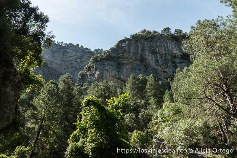 grandes paredes de roca se alzan sobre las copas de los árboles en el nacimiento del río mundo escapada a albacete