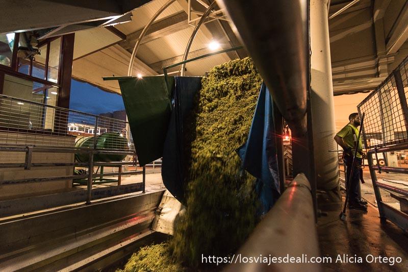 remolque de uvas descargando en una bodega de tomelloso en la experiencia en la vendimia