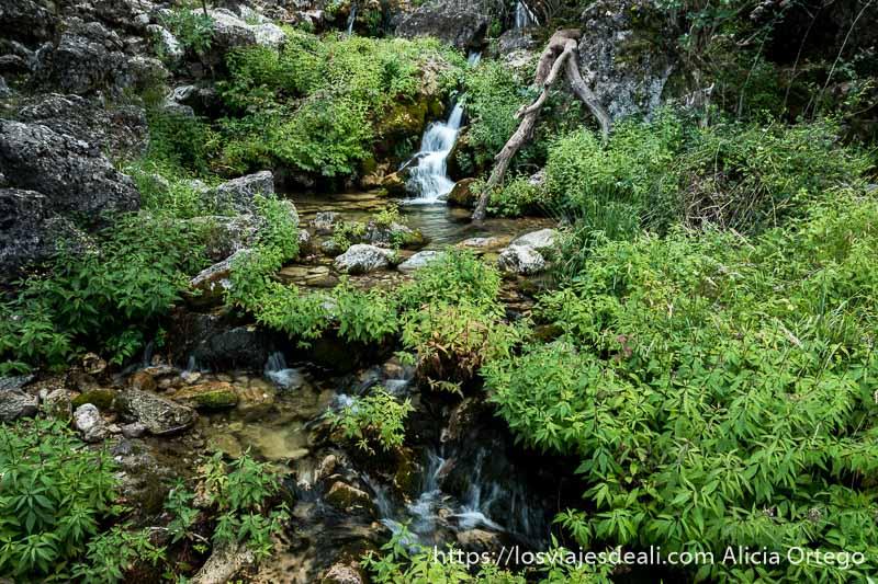 paisaje con río y cascada al fondo y muchas plantas verdes entre rocas escapada a albacete río mundo