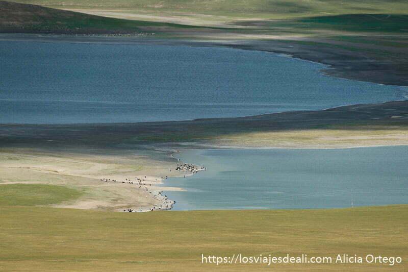 lago zuun nuur visto desde arriba con rebaño de ovejas blancas y negras en su orilla