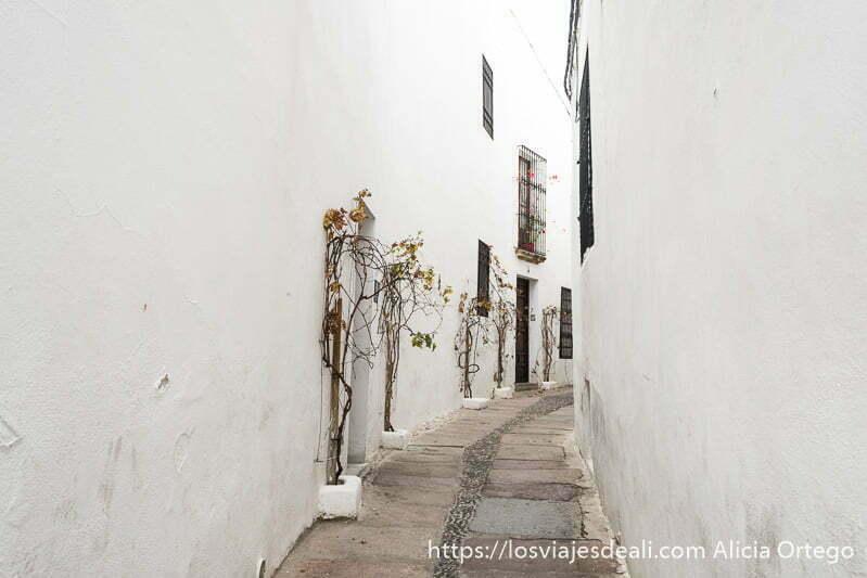 callejón del pañuelo todo blanco con algunas ventanas con rejas y algunas plantas trepadoras