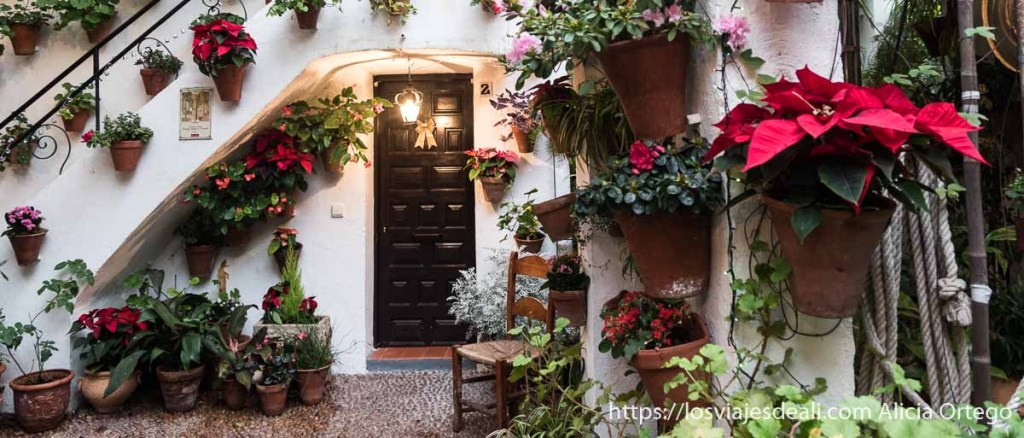 patios de córdoba con muchas macetas con flores rojas y rosas y puerta de madera oscura con pequeño farol encendido