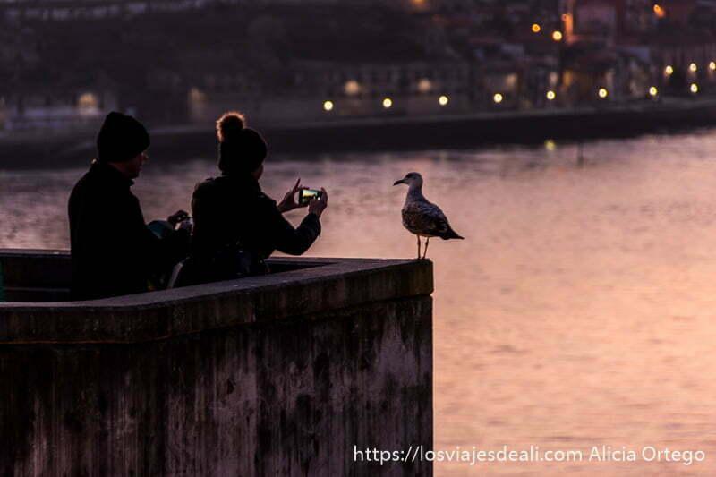 dos turistas hacen fotos con el móvil a una gaviota posada y detrás el río duero en razones para viajar a oporto