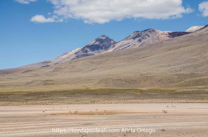 paisaje del altiplano con un grupo de vicuñas alrededor de un pequeño lago y dos volcanes al fondo uno de los lugares maravillosos de perú