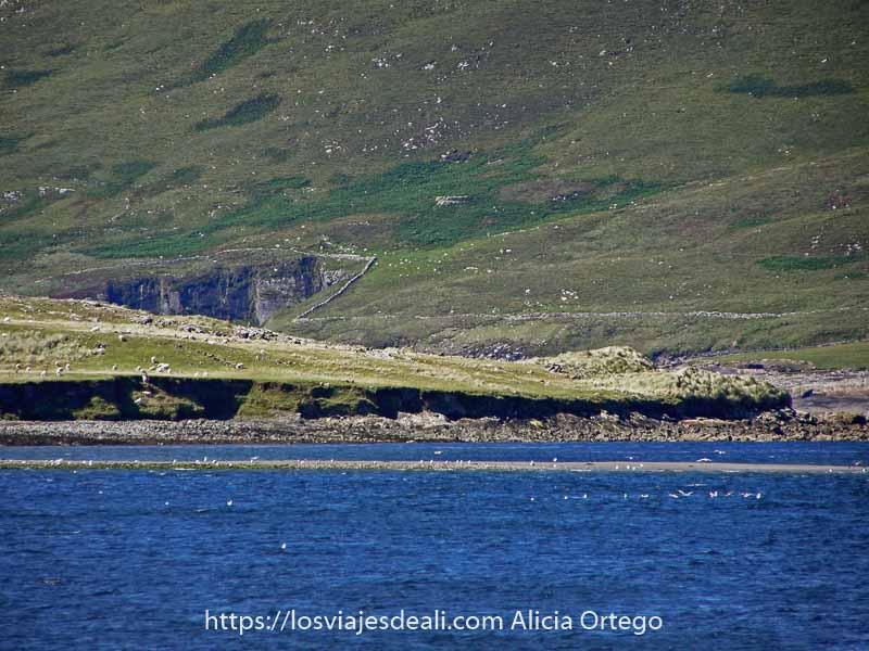 ladera de montaña verde y mar en primer plano con algunas gaviotas nadando en el agua en el ring of kerry