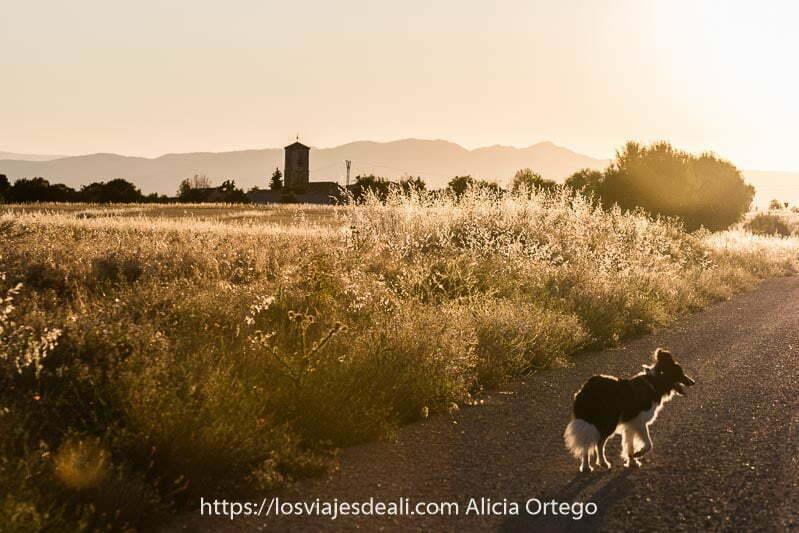 paisaje con la torre de la iglesia y montañas al fondo, y en primer plano pista con perro corriendo todo con luz anaranjada de atardecer