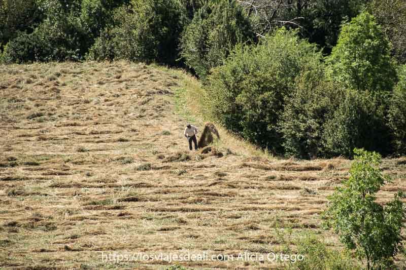 hombre amontonando hierba en un prado del Valle de Pineta
