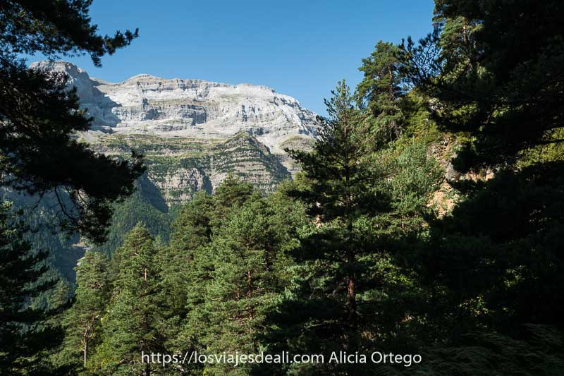 vistas del bosque de pinos y cumbres de roca al fondo en la ruta de espierba