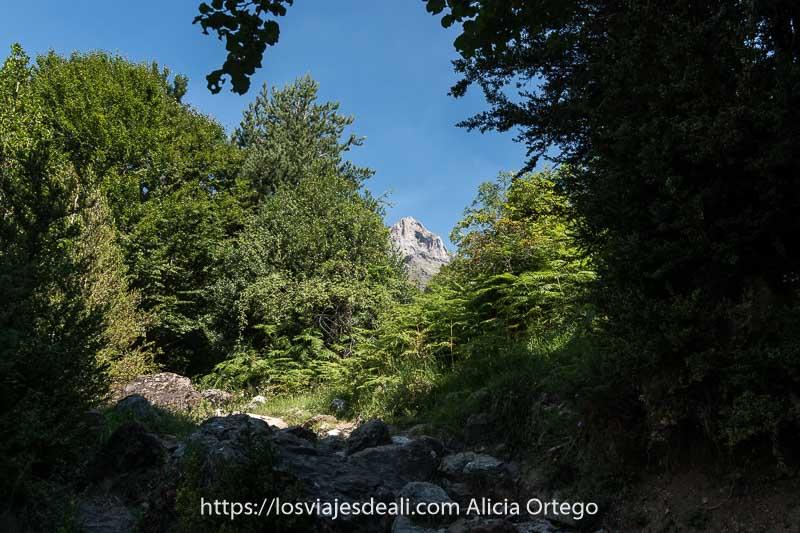 camino saliendo del bosque entre helechos con una cumbre al fondo en el Valle de Pineta