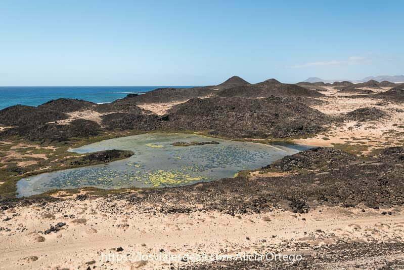 saladar al pie del faro, con plantas verdes en el agua rodeada de antiguos cráteres de volcanes