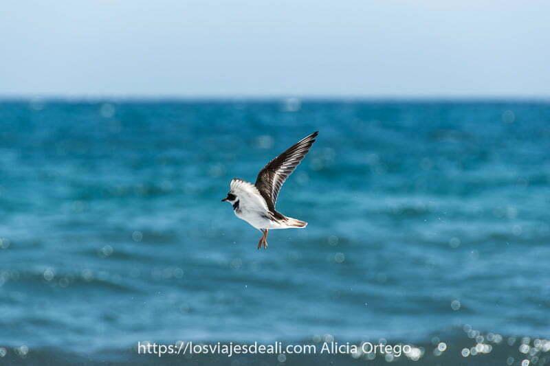 ave marina con alas desplegadas volando sobre el mar