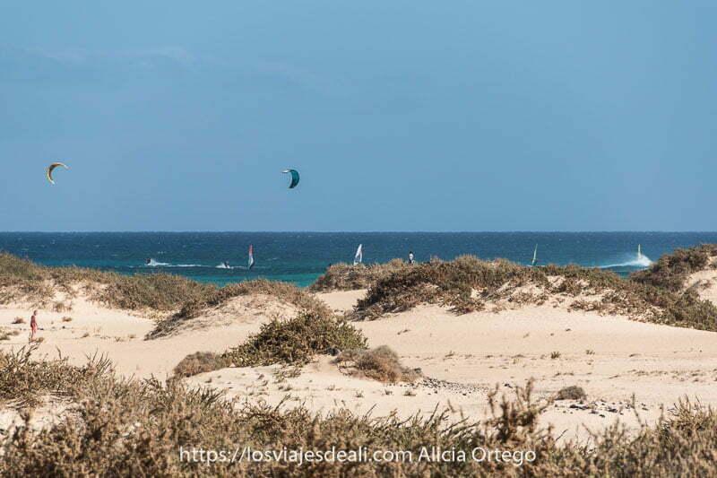 dunas de corralejo con plantas encima y velas de kitesurf en la playa