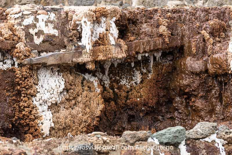 pared de roca con agua surgiendo y mucha sal cristalizada formando pequeñas estalactitas en color blanco y amarillo