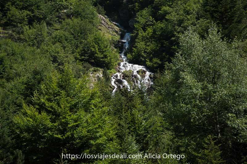 pequeña cascada cayendo entre árboles verdes